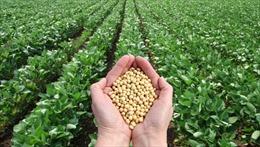 Nga cấm nhập khẩu đậu nành và ngô từ Mỹ
