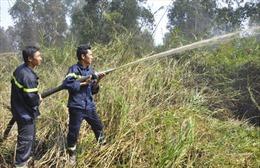 Đã dập tắt cháy rừng phòng hộ ở Bà Rịa - Vũng Tàu