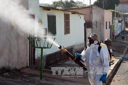WHO cảnh báo cuộc chiến chống virus Zika sẽ kéo dài