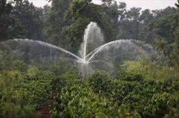 Đắk Lắk tập trung tưới nước cho cây cà phê