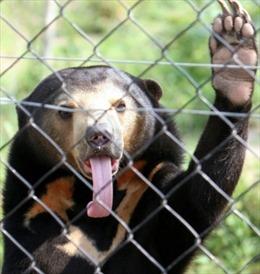 Mạng xã hội – chợ đen buôn bán động vật hoang dã tại châu Á