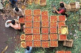 Ấn Độ muốn đổi lương thực lấy dầu của UAE