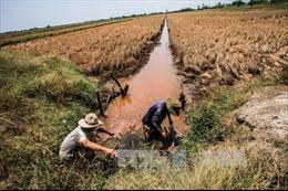 Mặn xâm nhập sâu các tỉnh Đồng bằng sông Cửu Long