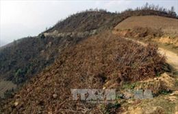 Dập tắt cháy rừng tại Mù Cang Chải sau 15 giờ