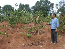 Đắk Lắk sử dụng nguồn nước hợp lý, tiết kiệm