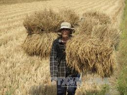 Hạt ngọc mùa vàng - Gởi ngàn tri ân