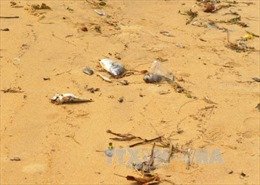 Cháu bé ngộ độc do ăn cá dạt vào bờ biển