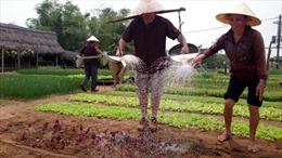 Du lịch nông nghiệp đang cần chính sách hỗ trợ về quy hoạch, quảng bá