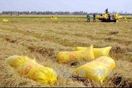 Để dành nước, Khánh Hòa dừng canh tác 2.000 ha lúa