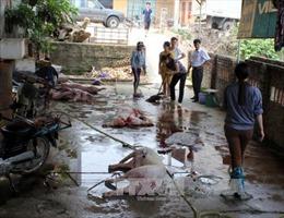 Quảng Ninh phát hiện 2 cơ sở mổ lợn chết