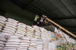Cần linh hoạt trước diễn biến khó lường của thị trường gạo