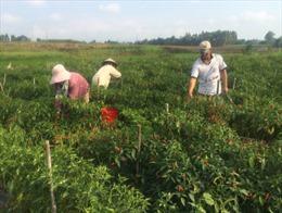 Diện mạo nông thôn vùng cách mạng KBang