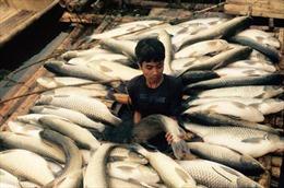 Thanh Hóa báo cáo việc cá chết hàng loạt trên sông Bưởi