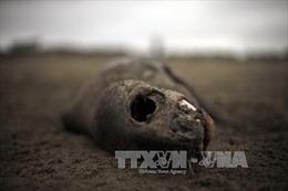 """""""Thủy triều đỏ"""" có thể đẩy Chile vào thảm họa môi trường"""