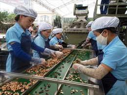 Doanh nghiệp phải nhập nguyên liệu nông sản