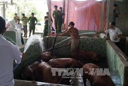 Đánh tráo lợn nhiễm chất cấm tuồn vào lò mổ