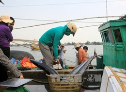 Việt Nam luôn tôn trọng các quyền và tự do cơ bản