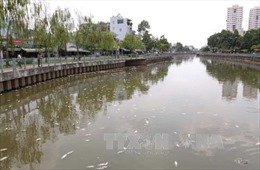 Cá chết trên kênh Nhiêu Lộc - Thị Nghè do ô nhiễm