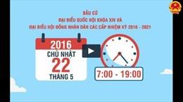 Video sinh động về quy trình bỏ phiếu bầu cử
