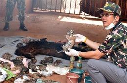 3 nhà sư Thái Lan bị truy tố trong vụ phát hiện 40 xác con hổ