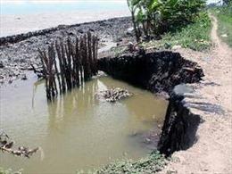 Nguy cơ sạt lở đê biển ở Cà Mau