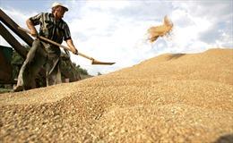Vượt Mỹ-Canada, Nga thành nước xuất khẩu lúa mì hàng đầu
