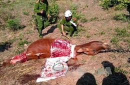 Phú Yên liên tiếp xảy ra trộm bò táo tợn