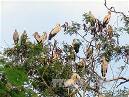 Chim quý kéo về sinh sống ở di tích hầm Đờ Cát