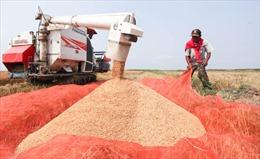 Lào xây hàng loạt kho dự trữ gạo