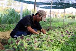 Nông nghiệp hữu cơ gặp khó vì thiếu chứng nhận