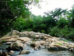 Cán bộ Vườn quốc gia Núi Chúa bị đâm chết khi làm nhiệm vụ