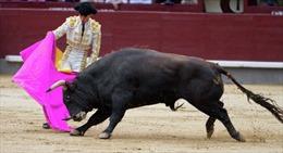 Bò tót húc chết dũng sĩ ngay tại đấu trường