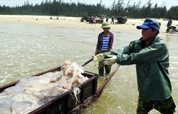 Ổn định đời sống người dân sau sự cố ô nhiễm biển