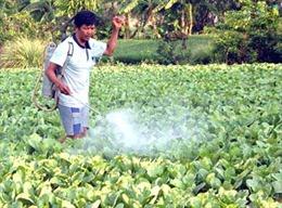 Gia tăng ngộ độc thuốc bảo vệ thực vật ở Sơn La