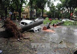 Để tai nạn do cây đổ không còn là nỗi lo rình rập trênđường phố Thủ đô
