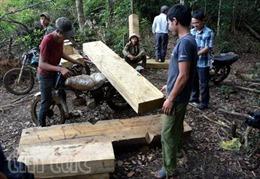 Thủ tướng đồng ý báo cáo kết quả kiểm tra việc khai thác gỗ tại Kon Tum