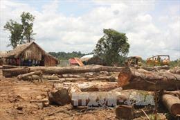 Bình Phước đình chỉ dự án chăn nuôi kết hợp trồng rừng tại Bù Đốp