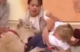 Sư tử suýt ăn thịt em bé trên sóng truyền hình trực tiếp