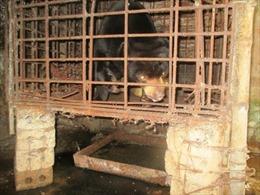 Cứu hộ gấu chó tại Nam Định