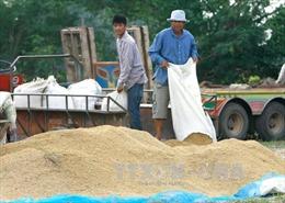Thái Lan cân nhắc tạm ngừng bán gạo dự trữ