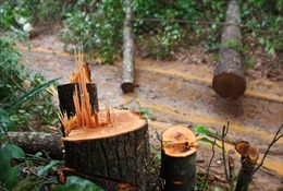 Mỗi năm, phát hiện 16.980 vụ vi phạm về bảo vệ, phát triển rừng
