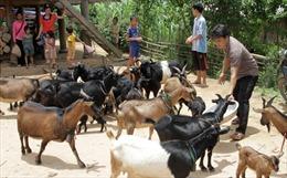 Gieo vốn tín dụng chính sách ở Điện Biên
