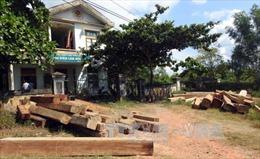 Khởi tố 2 vụ án phá rừng đầu nguồn ở Quảng Trị