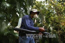 Hơn 1/3 dân số toàn cầu sống tại khu vực có nguy cơ nhiễm virus Zika