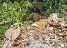 Huyện Tủa Chùa-Điện Biên thừa nhận tình trạng phá rừng