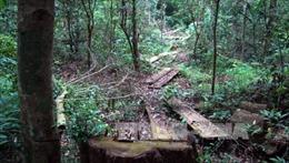 Xử lý nghiêm vụ chặt phá rừng phòng hộ lưu vực sông Bến Hải
