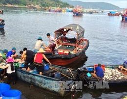 Cá chết trên biển Nghi Sơn không liên quan tới Formosa và bùn thải