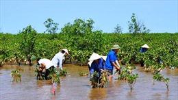 Chính sách phát triển bền vững rừng ven biển