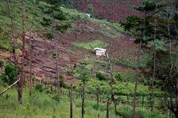 """Đắk Nông vẫn tồn tại """"điểm nóng"""" phá rừng"""