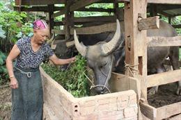 Gian nan xóa đói, giảm nghèo ở Yên Sơn